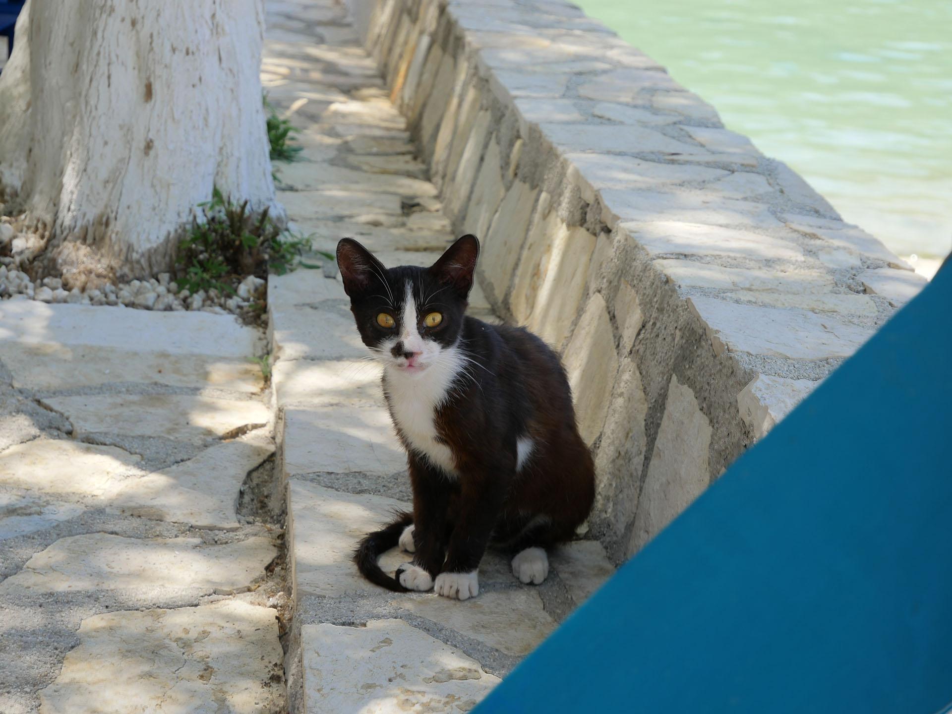 Kot w Assos