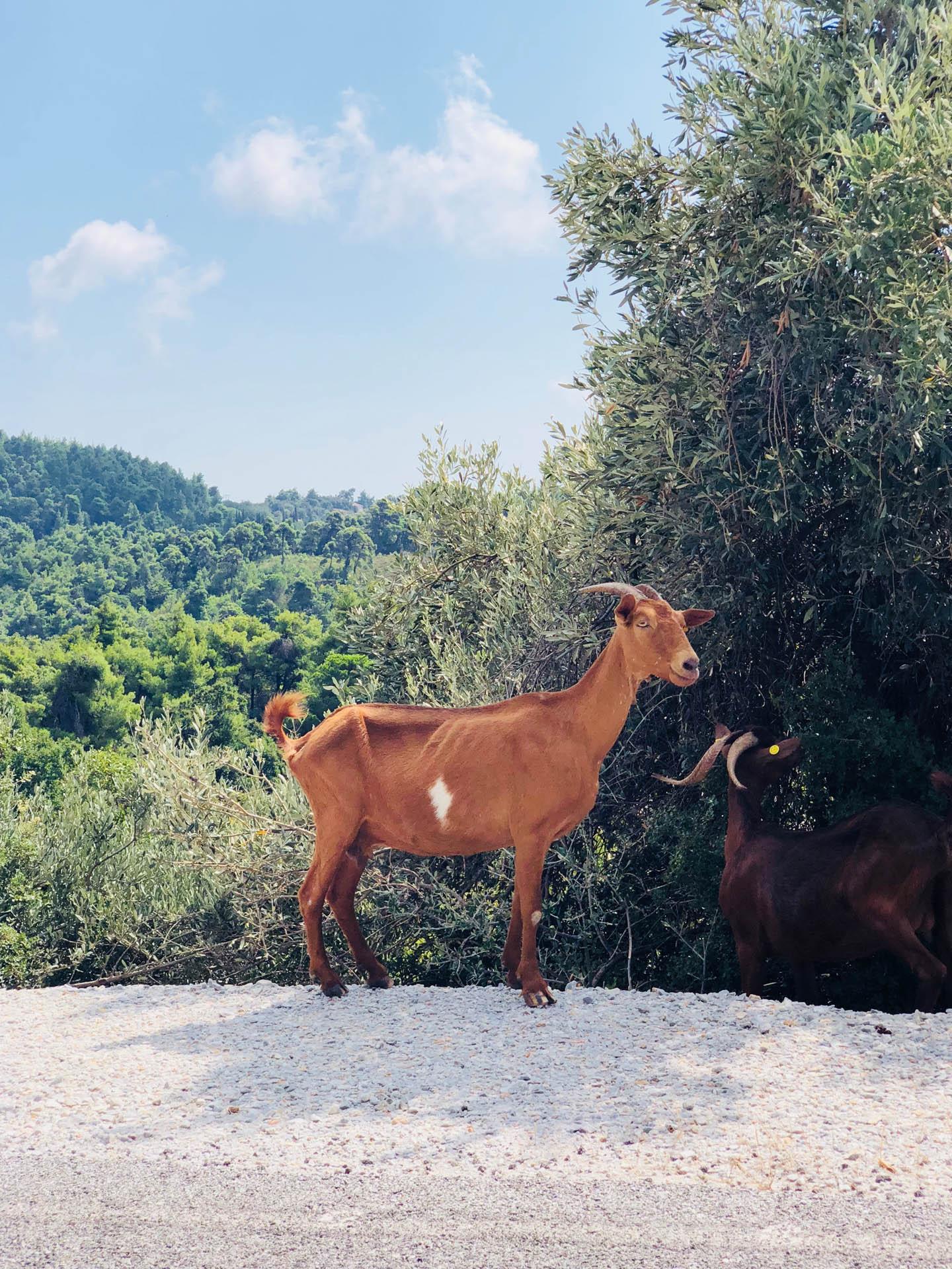 Kozy w Grecji