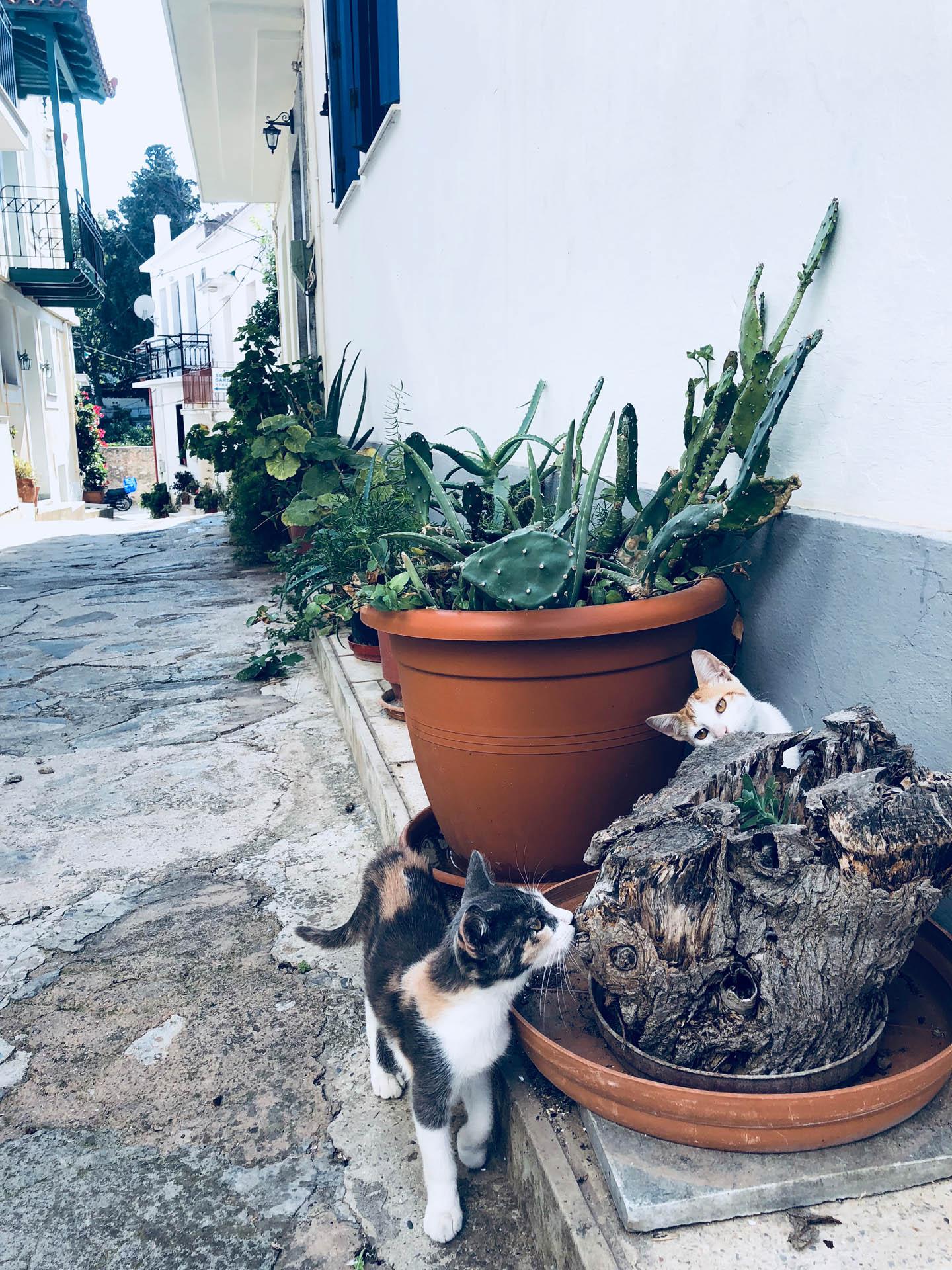 Koty na Skopelos